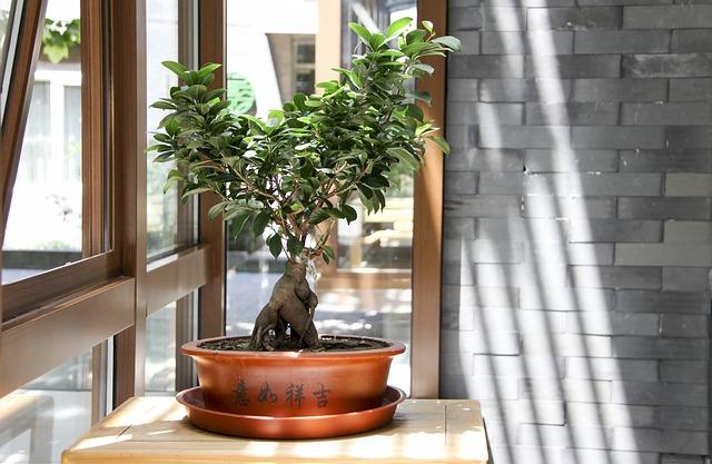 Drzewko bonsai - wymagania i hodowla