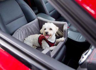 Bezpieczna podróż z psem w samochodzie