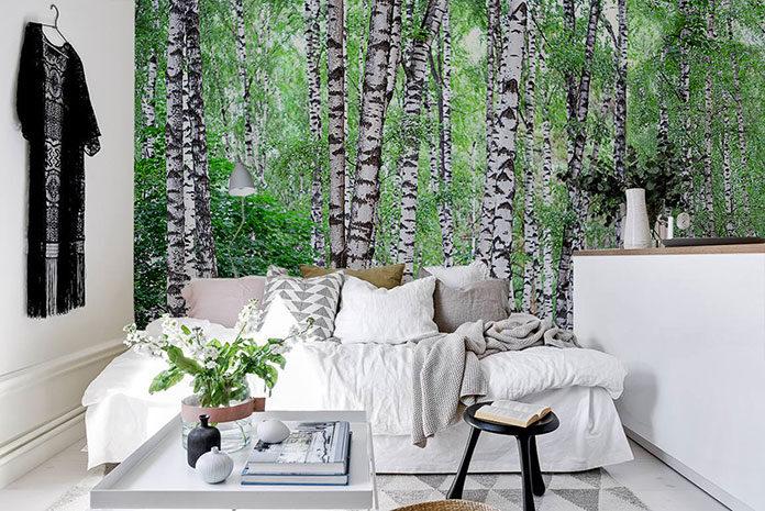 Brzozowy las – fototapeta, która nas oczaruje
