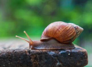 Śluz ślimaka - właściwości