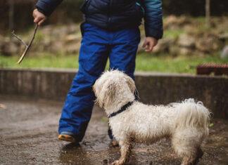 O czym należy pamiętać podczas zabawy z psem na wybiegu