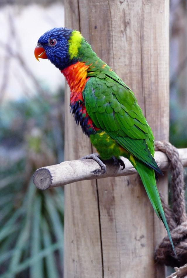 kolby dla ptaków