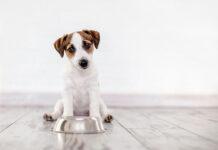 Cechy dobrej karmy dla psa
